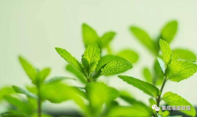 """夏季室内异味大?集成墙面联盟教你养这""""3种植物""""!"""